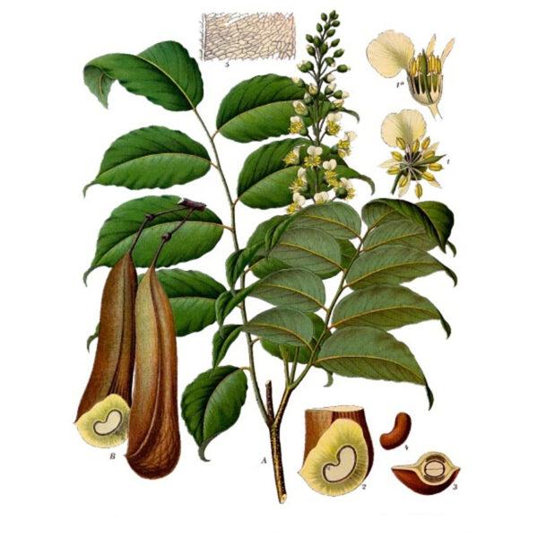 Perubalsum